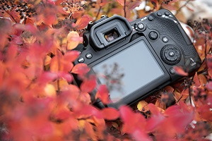 Fototest zrkadlovky Canon EOS 90D