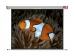NOBO 4:3 WALL SCREEN 2400x1813MM- manuálne plátno matné biele